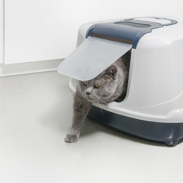 c250-021-flip-corner-royal-blue-with-cat-2
